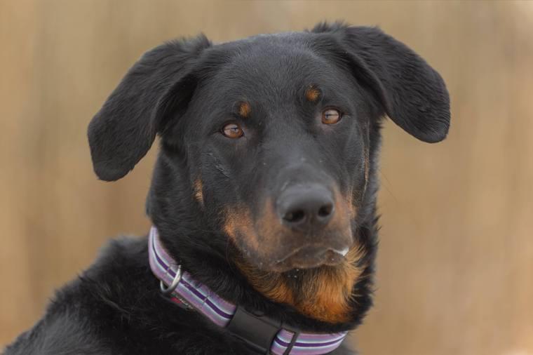 leinenagression:der streßfreie Weg aus reaktiven Hundebegegnungen